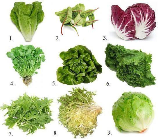 фото виды листьев салата с названием мне тут снова